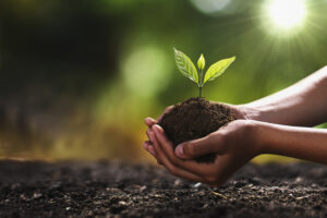Clasped hands holding dirt with seedling.